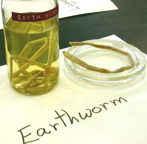 earth worm