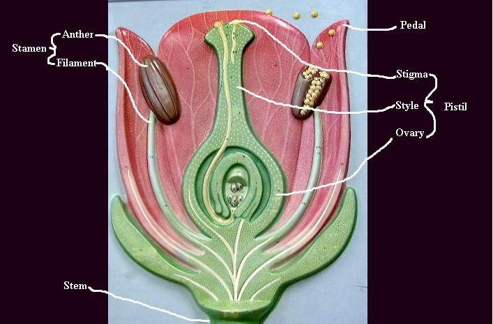 model of flower
